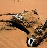 Droughts set Southern Africa on ticking time bomb